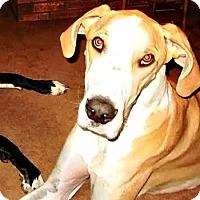 Adopt A Pet :: Sampson - Boonton, NJ