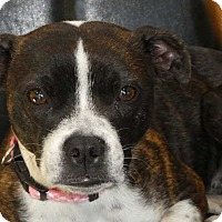 Adopt A Pet :: Pearl - Wyanet, IL