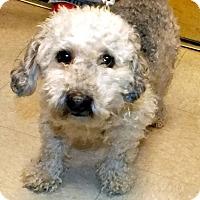 Adopt A Pet :: Rocky - Tinton Falls, NJ