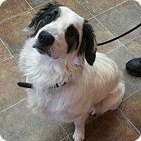 Adopt A Pet :: Tanner - Lisbon, OH