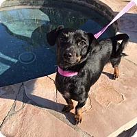Adopt A Pet :: Marcus - San Diego, CA