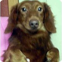 Adopt A Pet :: Gunner - Harrison, AR