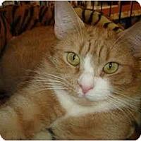 Adopt A Pet :: Jarvis - Chesapeake, VA