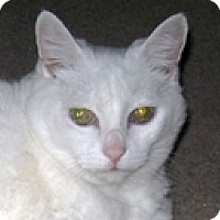 Adopt A Pet :: Putter - Vancouver, BC
