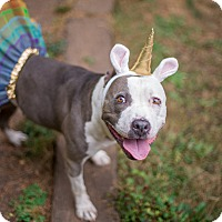 Adopt A Pet :: Katrina - Portland, OR
