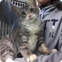 Adopt A Pet :: GreyPaws - Arlington, VA