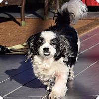 Adopt A Pet :: Sadie - Holmes Beach, FL