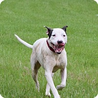 Adopt A Pet :: Dino - Natchitoches, LA