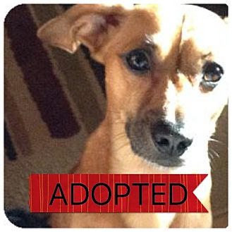 Dachshund Mix Dog for adoption in Regina, Saskatchewan - Duke