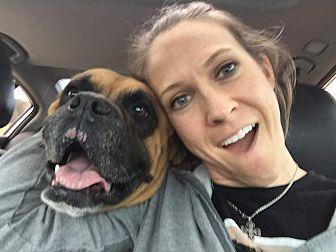 Boxer Dog for adoption in Austin, Texas - Lino
