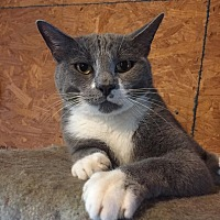 Adopt A Pet :: Prince Charming - Centerton, AR