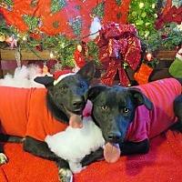 Adopt A Pet :: Guri - Sherman Oaks, CA