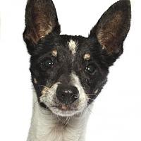 Adopt A Pet :: Brandy - oakland park, FL