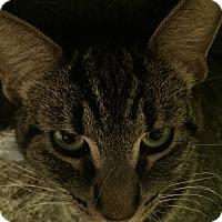 Adopt A Pet :: Dory - Warren, MI