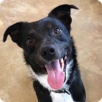 Adopt A Pet :: Henry - Green Bay, WI