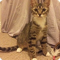 Adopt A Pet :: Junebug - East Brunswick, NJ