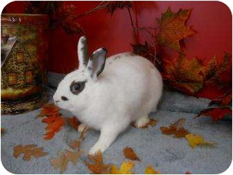 Other/Unknown Mix for adoption in Roseville, California - Diva