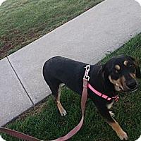 Adopt A Pet :: Sweet Pea - Bridgewater, NJ