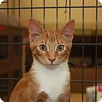 Adopt A Pet :: Jacob (DG) - Little Falls, NJ