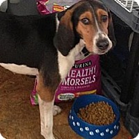 Adopt A Pet :: Mandy - Schererville, IN