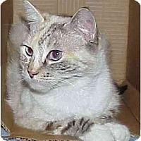 Adopt A Pet :: Blue (Gorgeous!) - Portland, OR