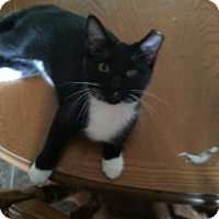 Adopt A Pet :: Whiskers - Chesterfield, VA