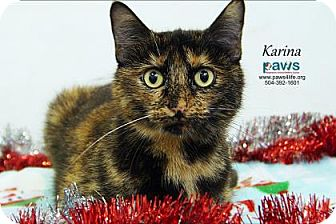 Domestic Shorthair Cat for adoption in Belle Chasse, Louisiana - Karina