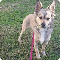 Adopt A Pet :: Abby - San Diego, CA