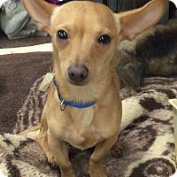 Adopt A Pet :: Lil John Wayne - Kilgore, TX