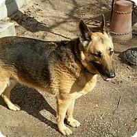 Adopt A Pet :: MORGAN - SAN ANTONIO, TX