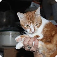 Adopt A Pet :: Ruby - Tucson, AZ