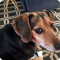 Adopt A Pet :: Danny - Lincoln, NE