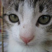 Adopt A Pet :: DOC - Cleveland, OH