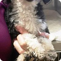 Adopt A Pet :: PRINCESS - BECAUSE I AM! - DeLand, FL