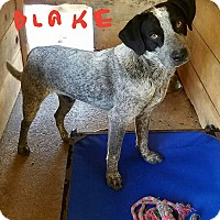 Adopt A Pet :: Blake - Lawrenceburg, TN