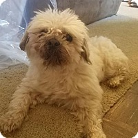Adopt A Pet :: Cooper - Oakdale, TN