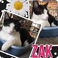 Adopt A Pet :: Zak - Keller, TX