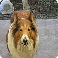 Adopt A Pet :: Brutus - Trabuco Canyon, CA