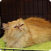 Adopt A Pet :: Luna (LE) - Little Falls, NJ