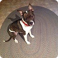 Adopt A Pet :: Trish - Elderton, PA