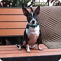 Adopt A Pet :: Junior - Davie, FL