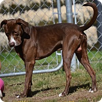 Adopt A Pet :: Braxton - Fort Riley, KS