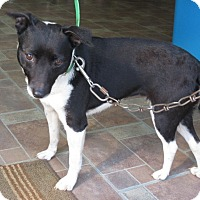 Adopt A Pet :: S1062    Penny - Bay Springs, MS