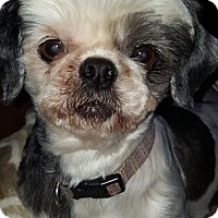 Adopt A Pet :: Mitzy - Cleveland, OH