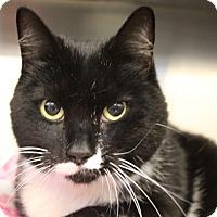 Adopt A Pet :: Bow - Sarasota, FL
