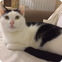 Adopt A Pet :: Ollie - Horsham, PA