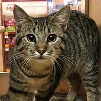 Adopt A Pet :: LORI (Kitten) - New Bern, NC