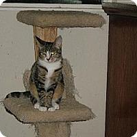 Adopt A Pet :: Tildy - Walnut Creek, CA