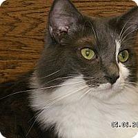 Adopt A Pet :: Isaiah - Ridgecrest, CA