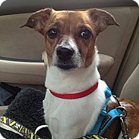 Adopt A Pet :: Samantha - Chicago, IL
